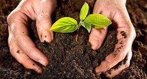 abono-ecologico