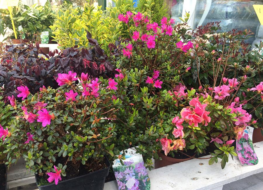 Las flores de verano lur 2000 - Flores de verano ...