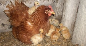 Mes renove para los animales de granja