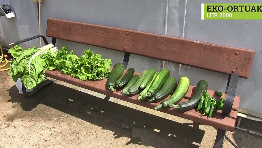 recolección-hortalizas-fruta-Lur 2000
