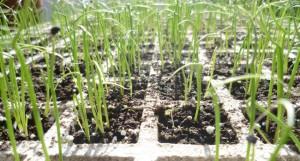 Bandeja de semilleros